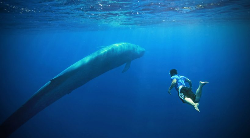 Blue Whale Challenge: PIL In Delhi HC To Remove Online Links Of Deadly Game